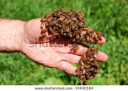 Beekeeper and his bees - stock photo