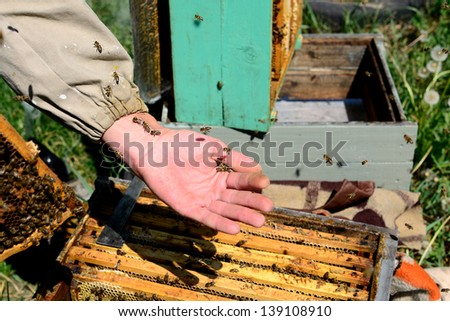 Beekeeper and his bees in hand