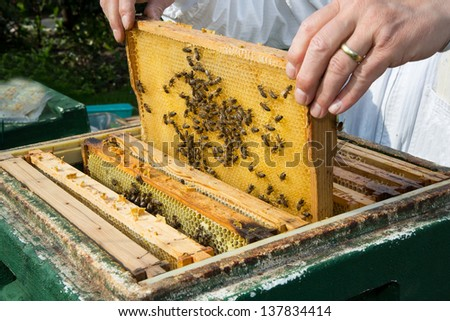 Beekeeper checking a beehive to ensure health of the bee colony or collecting honey - stock photo