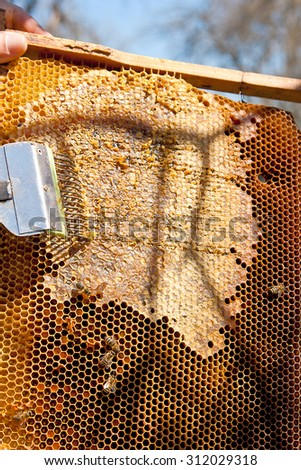 Beekeeper checking a beehive to ensure health of the bee colony or collecting honey. Honey is beekeeping healthy produce. Bee honey collected in the yellow beautiful honeycomb.  - stock photo