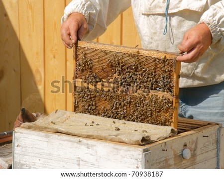 beekeeper checks honey