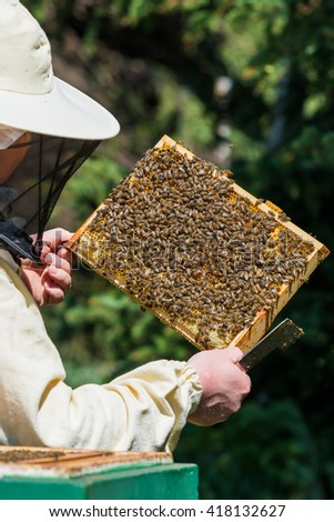 Beekeeper controls the honeycomb of honey bee (Apis mellifera)