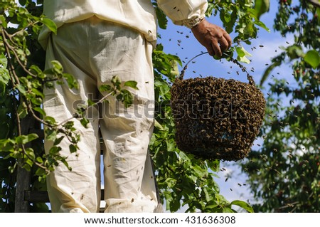 beekeeper holding a bee swarm, apiary, colony - stock photo
