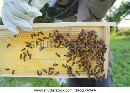 Beekeeper holds frame with honeycomb - stock photo