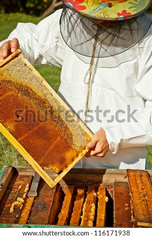 Beekeeper in an apiary holding a frame - stock photo