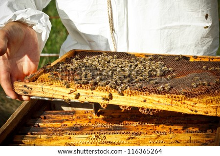 Beekeeper in an apiary holding a frame of honeycomb - stock photo