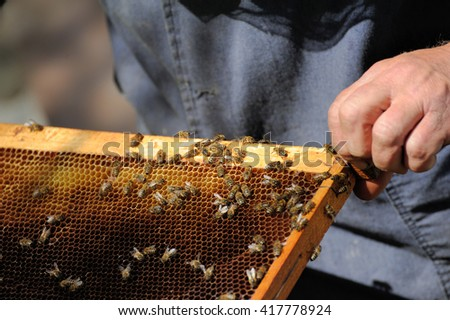 beekeeper inspects a frame of bees - stock photo