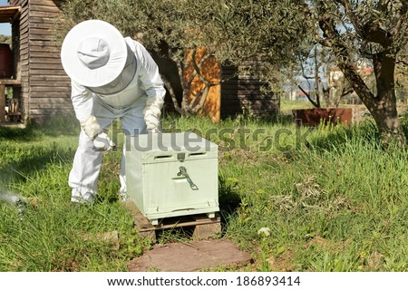 Beekeeper looking after bees and preparing for honey by maintaining the beehive - stock photo