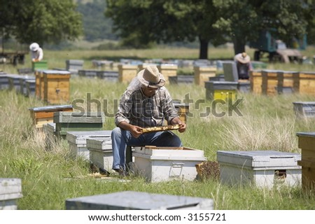beekeeper with his families of bees