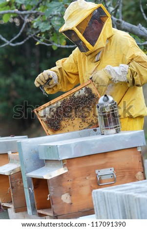 Beekeeper with smoker , beehives and honeycomb. Apiculture job. - stock photo