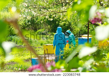 beekeepers work in the hive - stock photo