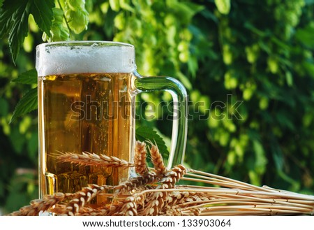 Beer and hop - stock photo