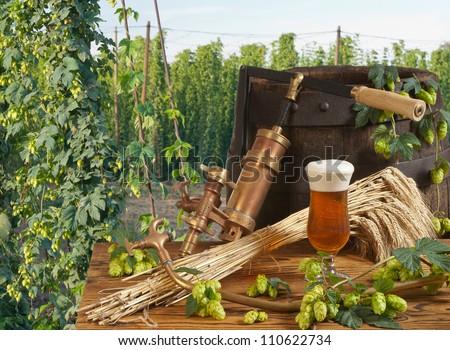 beer and hop garden - stock photo