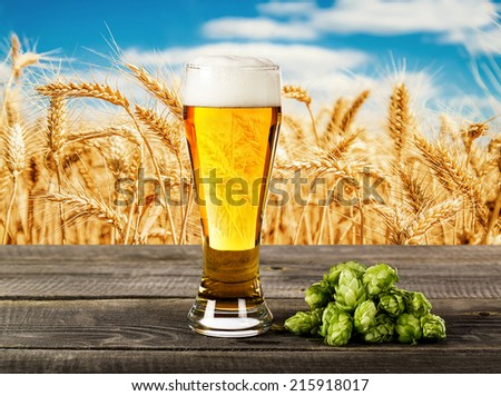 Beer glass with hops on the against a wheat field