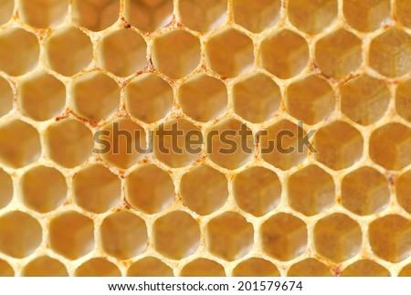 Beer honey in honeycombs. Natural sweet. - stock photo