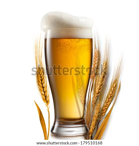 Beer in glass and wheat isolated on white background - stock photo