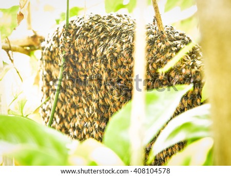 Bees and honey - stock photo