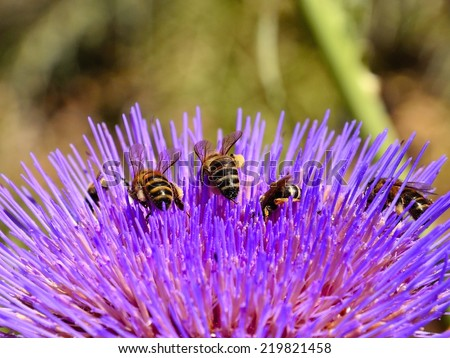 Bees and wasp foraging among the stamens of artichoke flower - stock photo