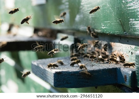 Bees at beehive - stock photo