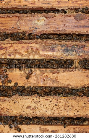Bees between the honey frames - stock photo