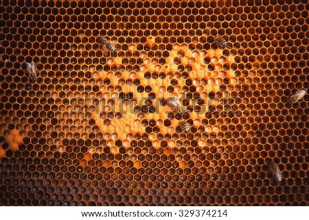 Bees Broods, Hardworking Bees on Honeycomb in Apiary
