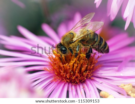 Bees collecting nectar