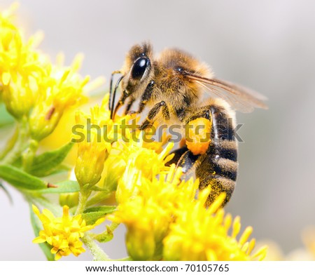 Bees collecting nectar from flower