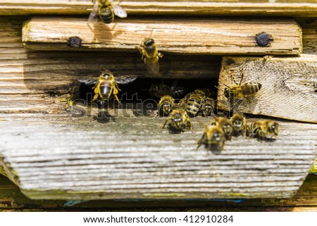 Bees fly in a wooden beehive - stock photo