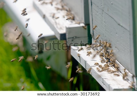 bees flying in and out of a hive - stock photo