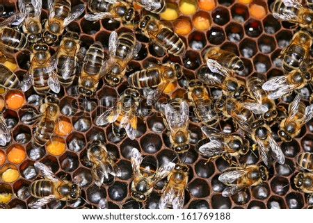 bees in a beehive - stock photo