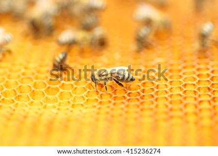 Bees in honey wax  - stock photo