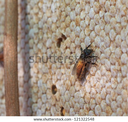 Bees in the hive and Honeycomb - stock photo