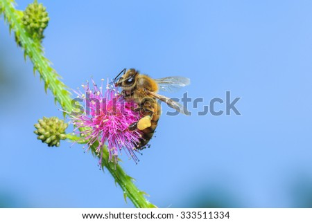 Bees, insects(bees find nectar from pollen) - stock photo