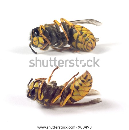 bees isolated - stock photo
