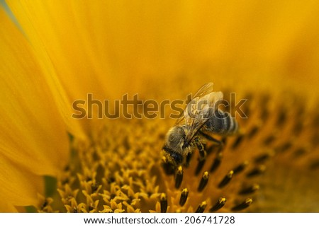 bees making pollination