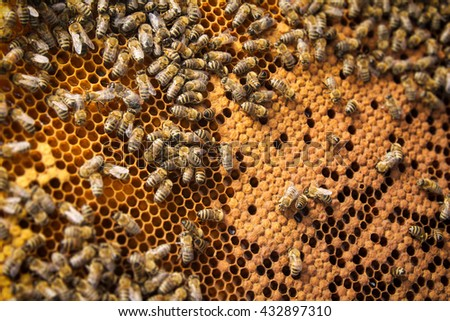 Bees on frame - stock photo