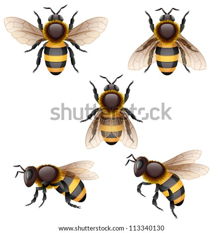 Bees on white - raster version - stock photo