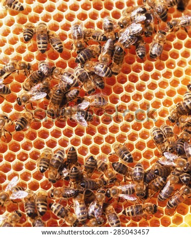 Bees sit on honeycombs with honey