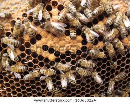 Bees take care of the larvae - their new generation. - stock photo
