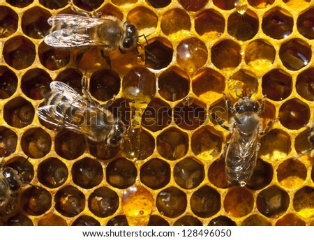 Bees take honey drops and laid him in a cell.