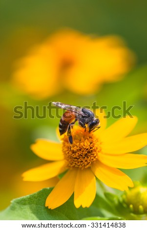 Bees with flowers
