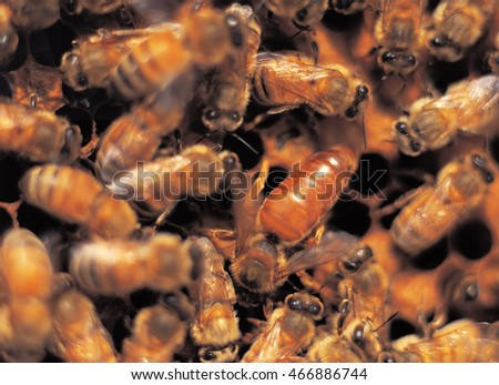 Bees work in the honeycomb