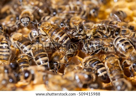 Bees work on hexagonal honeycombs