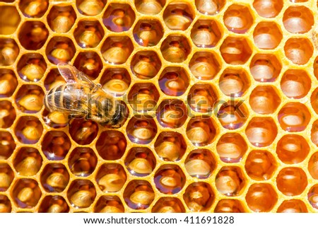 bees work on honeycomb with sweet honey