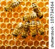 bees work on honeycombs - stock photo