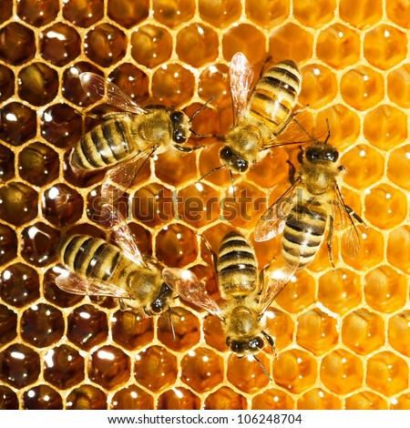 bees work on honeycombs, walking in circle - stock photo