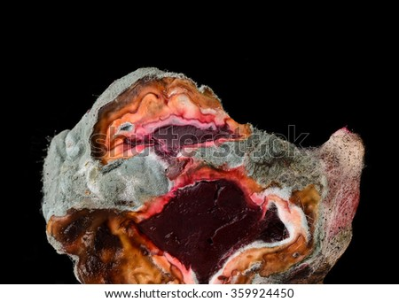 Beet covered with mold - stock photo