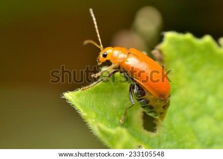 Beetle - stock photo