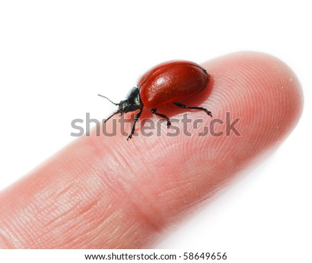 Beetle in front of white background, isolated.