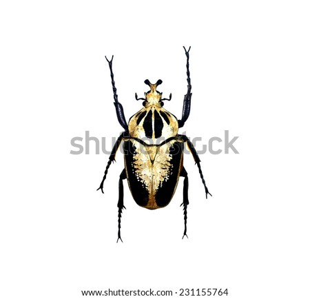 beetle isolated - stock photo